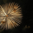 Firework in honor of Independence Day — Stock Photo #1749086