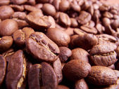 Coffee beans . Close up — Stock Photo