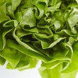 Stock Photo: Fresh lettuce