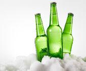 Beer bottles in snow — Stock Photo