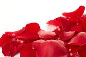 Pozadí růží — Stock fotografie