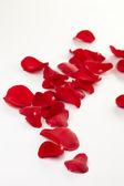 玫瑰花瓣背景 — 图库照片