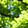 green leaves — Stock Photo #31820711