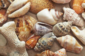Background made of seashells — Stok fotoğraf