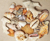 Background made of seashells — Stock Photo
