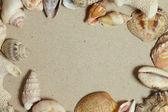 Frame made of seashells — Stock Photo