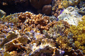 Coral reef — Stockfoto
