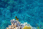 Coral reef — Foto de Stock