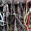 Details of diversity used horse reins - Stock Photo