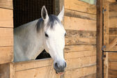 Details white horse in the stable box — Stock Photo
