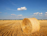 Field of freshly cut bales on farmer field — Stock Photo