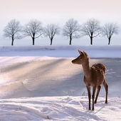 Doe and snwy landscape — Stock Photo