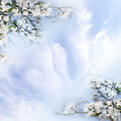 Bloemen aan appelbomen — Stockfoto