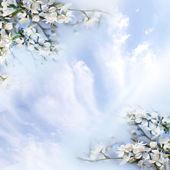 Kwiaty jabłoni — Zdjęcie stockowe