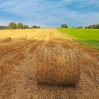 Agriculture summer landscape, field wheat  — Stock Photo