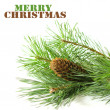 Pine branch with cones on a white background — 图库照片 #31829787