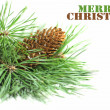 Pine branch with cones on a white background — 图库照片 #31829795
