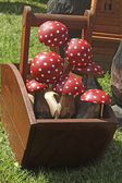 Red wood mushrooms — Stock Photo