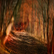 Burning wooden house in a forest — Stock Photo