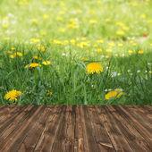 Sfondo primavera fresca — Foto Stock