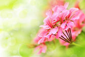 Beautiful floral background with pink flower buds and defocused lights — Stock Photo