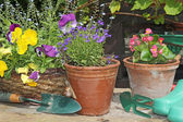 Spring flowers and planters. — Foto Stock