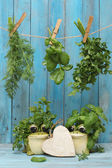 Assorted hanging Herbs on an old and vintage wooden blue — Stock Photo