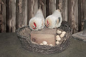 Chickens and eggs in the nest. Easter card — Stockfoto