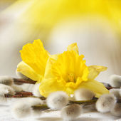 Easter narcissus and pussy willows — Stock Photo