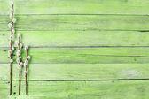 Gałązki wierzby cipki na tle drewna — Zdjęcie stockowe