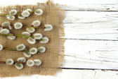 Pussy willow twigs on wood background — Foto de Stock