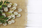 Pussy willow twigs on wood background — Stock Photo