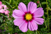Decorative flower space — Stock Photo