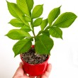 Humhands and young plant — Stock Photo #27150207