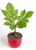 Pflanze — Stockfoto