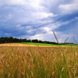 Wheat field panorama view — Lizenzfreies Foto