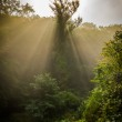 Magical forest at dusk — Stock Photo