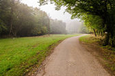 Road in forest — Stock Photo