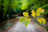 Leaf in the wood — Stock Photo