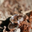 Wedding rings on the table — Stockfoto