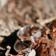 Wedding rings on the table - Foto Stock