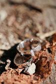 Anelli di nozze sul tavolo — Foto Stock