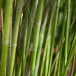 Green bamboo background — Stock Photo