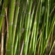 Green bamboo background - 图库照片