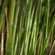 Green bamboo background - Zdjęcie stockowe