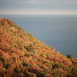 Autumn forest near the sea — Stockfoto