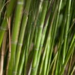 Green bamboo background — Stock Photo