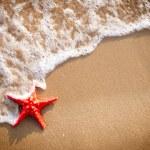 Sandy background with starfish — Stock Photo