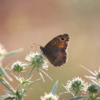 Butterfly morning nature scene — Stock Photo