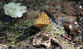 Butterfly beautiful morning nature scene — Stock Photo